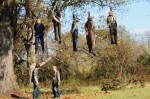Dark House - the hanging tree